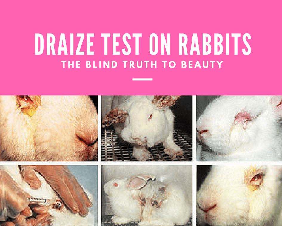eliminating animal testing Should ban testing cosmetics on animals  the european union has put in place a testing ban that prohibits animal testing  eliminating animal testing.